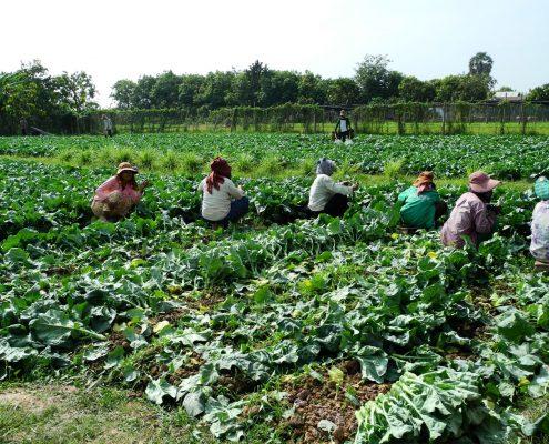 Farm Project